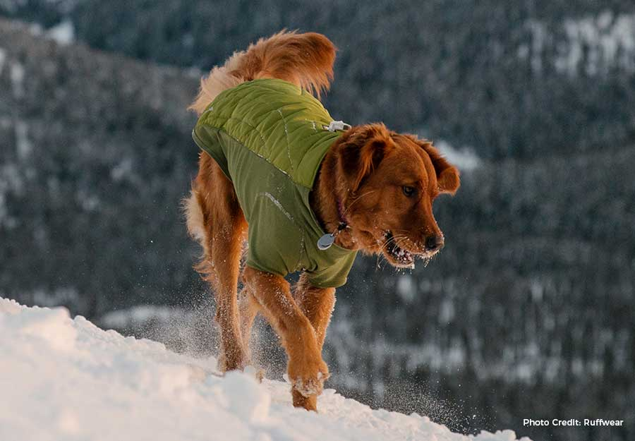 does-my-dog-need-a-coat-article-feature