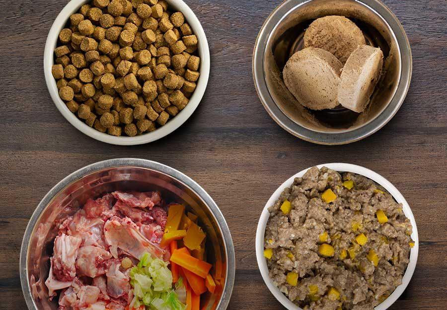 dog-food-guide-beginners-article-feature