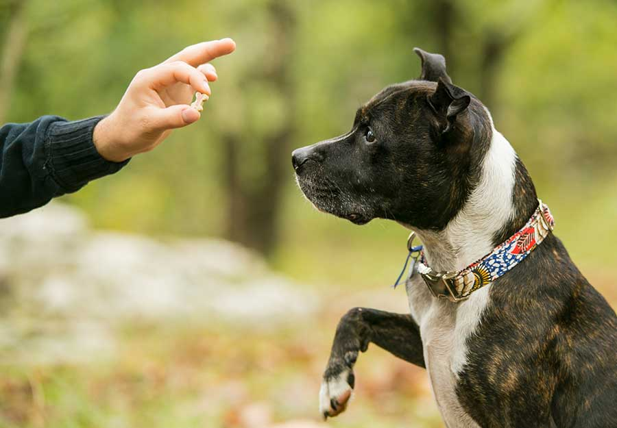 force-free-dog-training-article-feature
