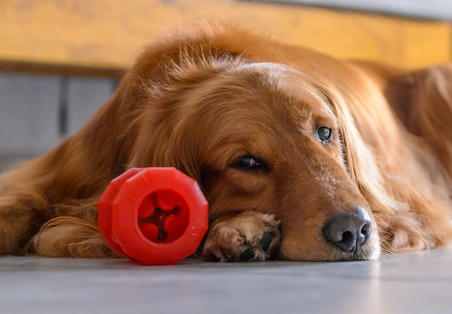 my-dog-doesnt-like-toys-article-feature