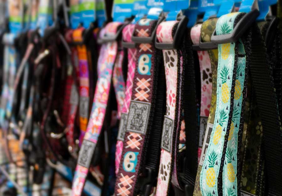 ultimate-dog-collar-guide-article-feature