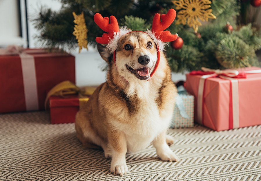 dog-christmas-wish-list-article-feature