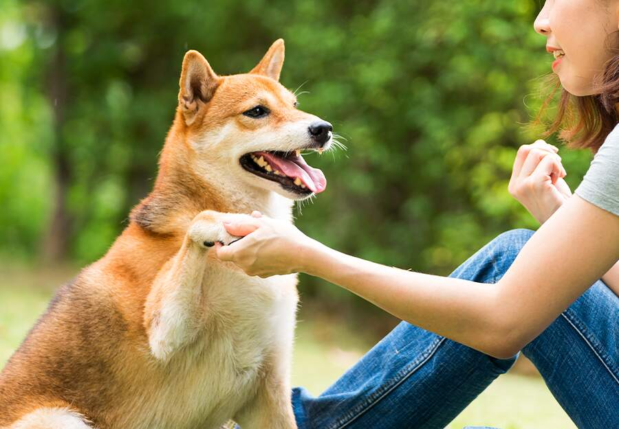 10 Dog Training Tips for First Time Pet Owners