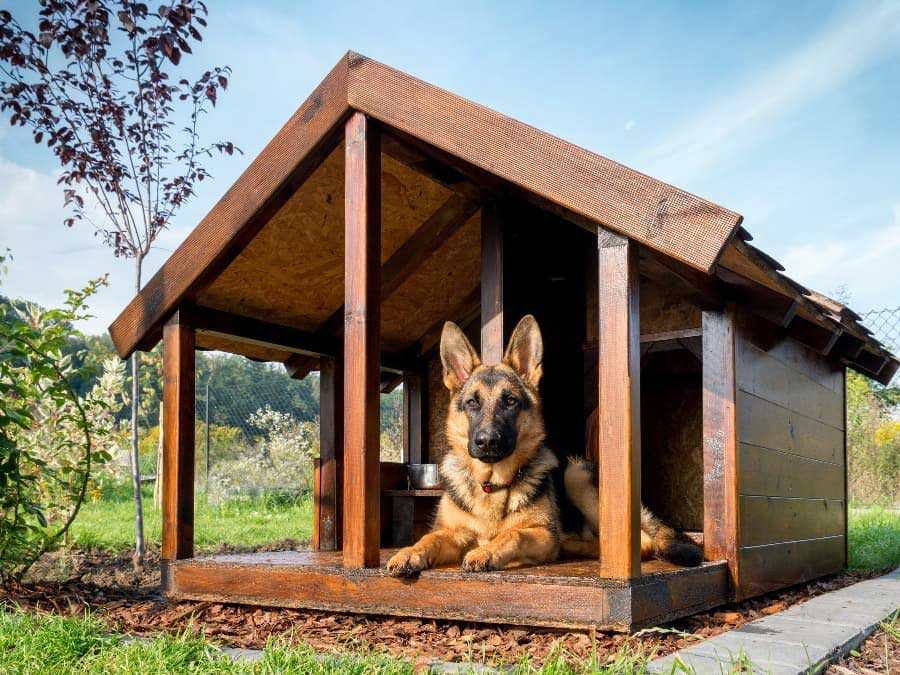 dog-relaxing-in-dog-house