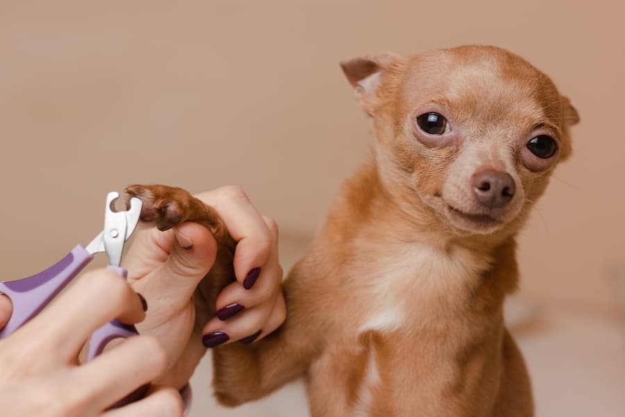How-to-cut-dog-nails-article-feature