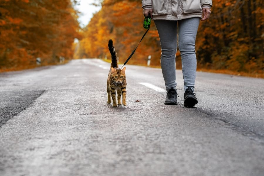 cat-on-a-leash-going-for-a-walk