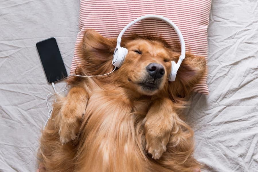 dog-wearing-headphones