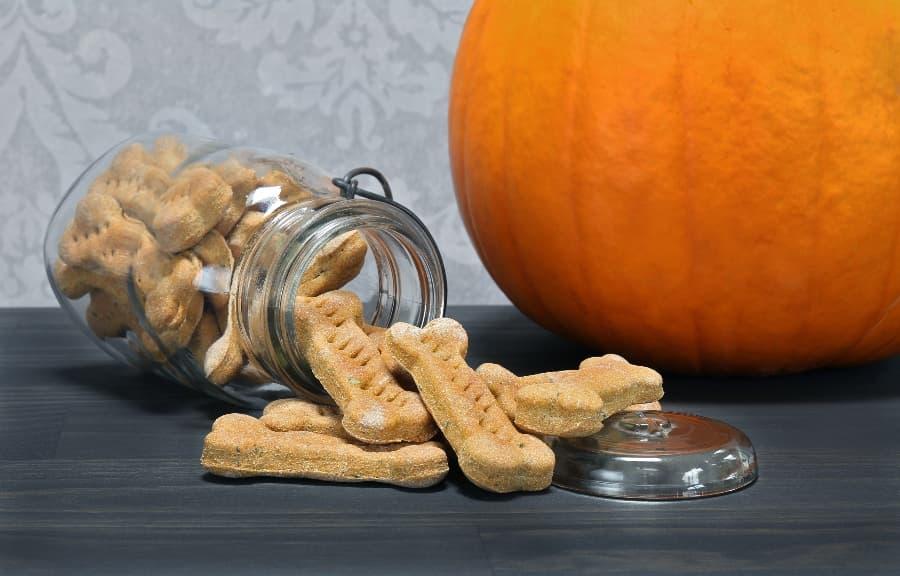 pumpkin-dog-treat-recipe-article-feature