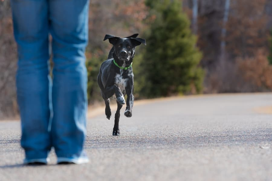 off-leash-dog-running-towards-owner