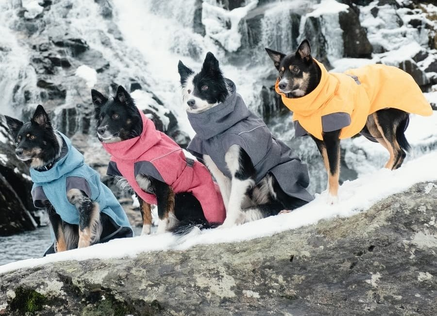 Winter-dog-coats-article feature