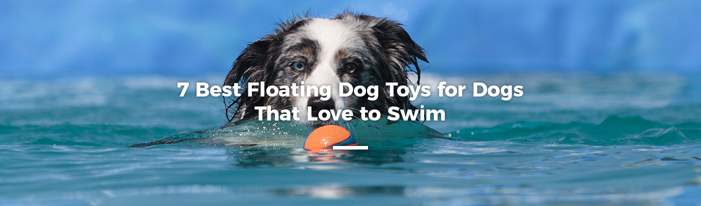 best-floating-dog-toys-home-feature