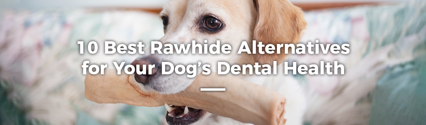 best-rawhide-alternatives-home-feature