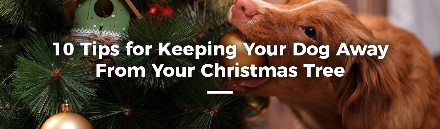 christmas-tree-safety-dog-kids-home-feature