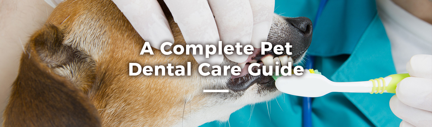 complete-pet-dental-guide-home-feature