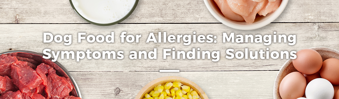 dog-food-allergies-home-feature