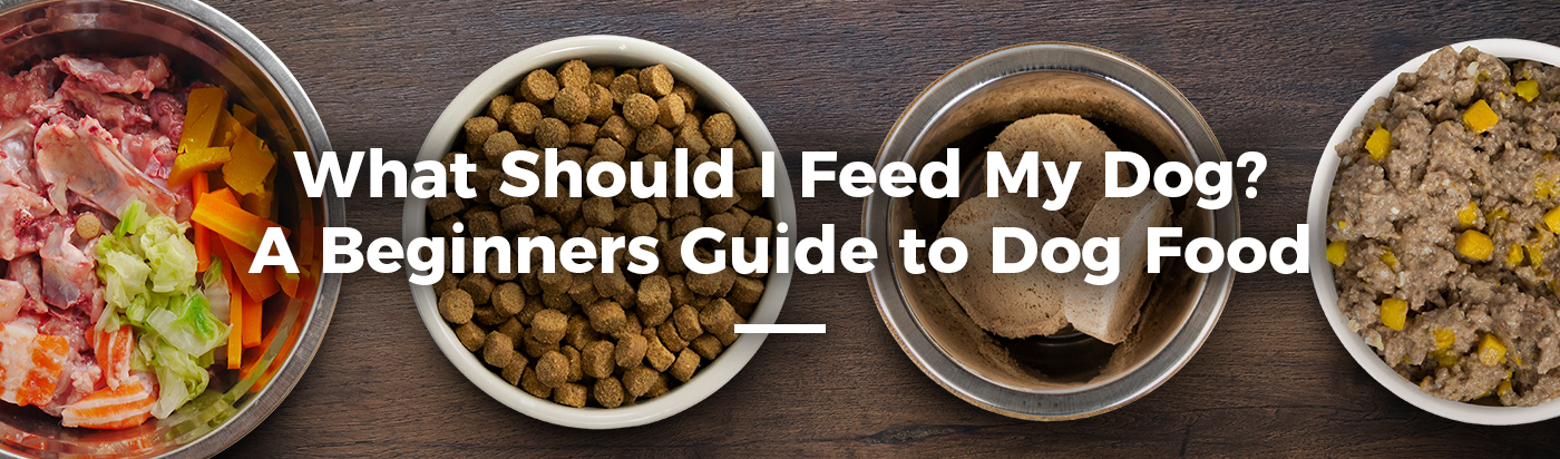 dog-food-guide-beginners-home-feature