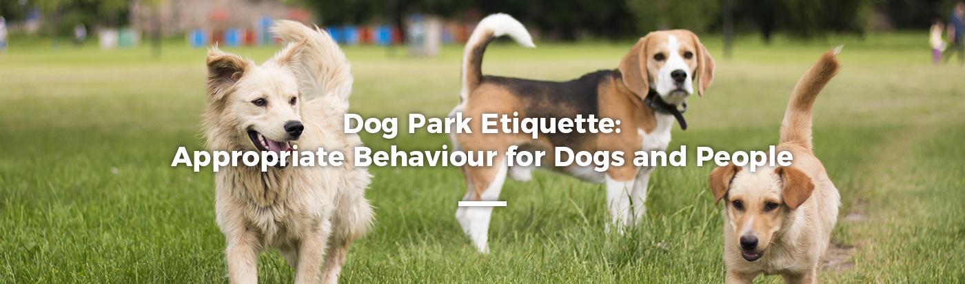 dog-park-etiquette-home-feature-1
