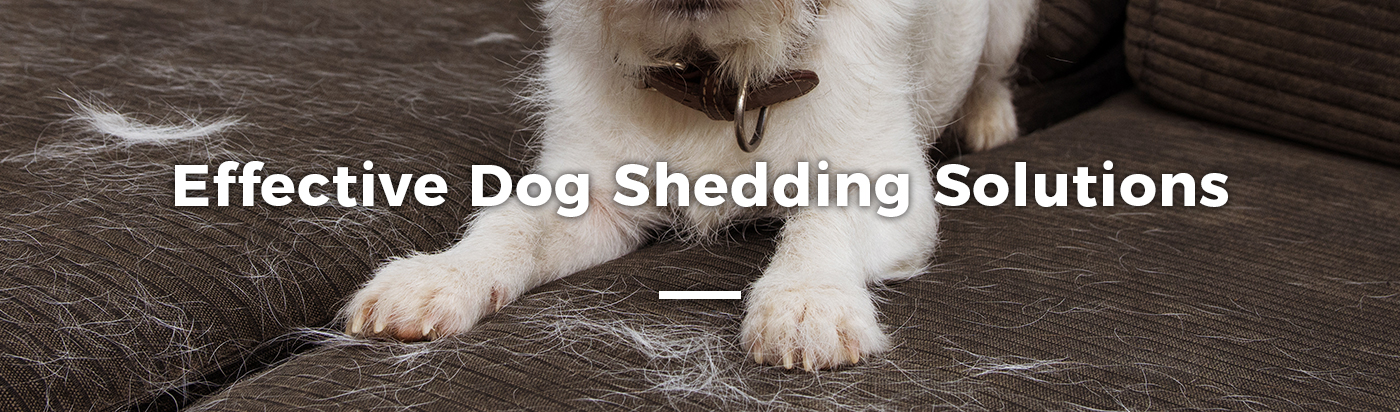 dog-shedding-solutions-home-feature