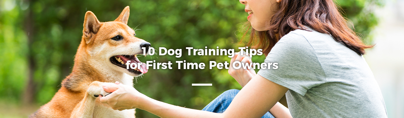 dog-training-tips-first-time-home-feature
