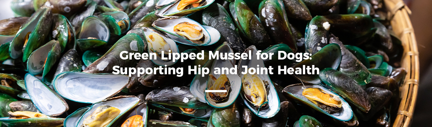 green-lipped-mussels-dogs-home-feature