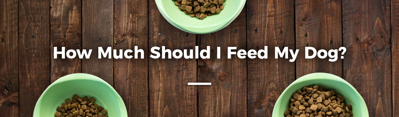 how-much-feed-dog-home-feature-1