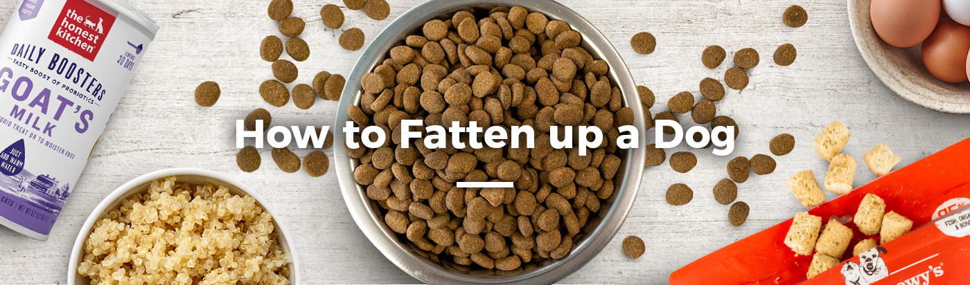 how-to-fatten-up-dog-home-feature