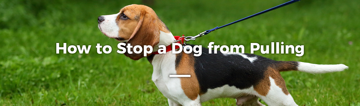 how-to-stop-dog-from-pulling-home-feature