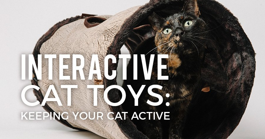 interactive-cat-toys-article-feature