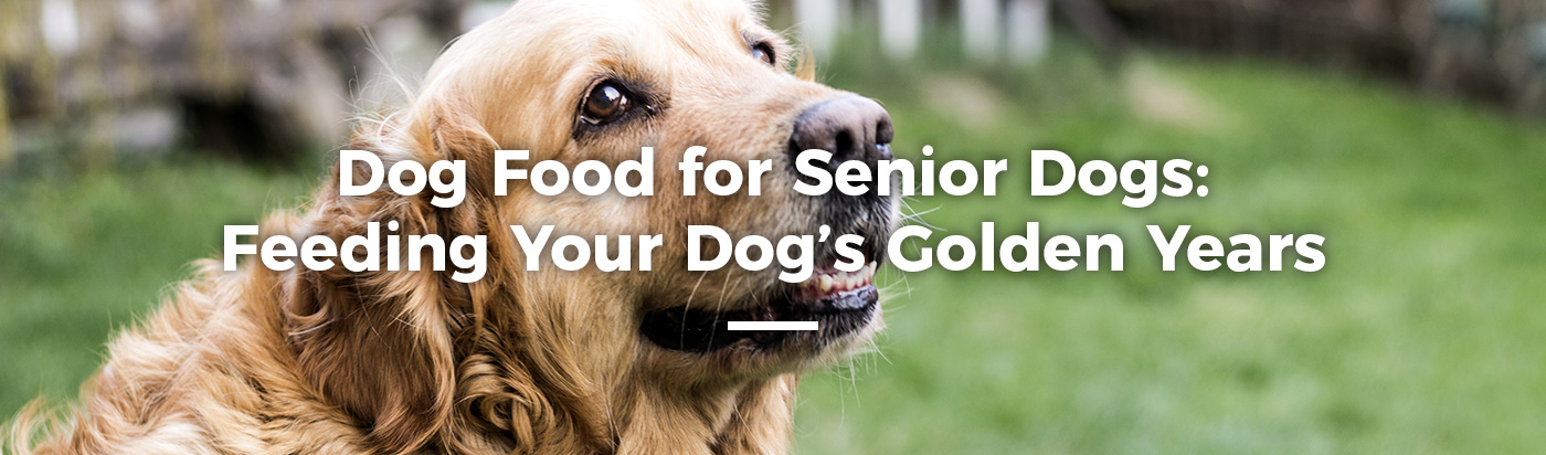 senior-dog-food-home-feature