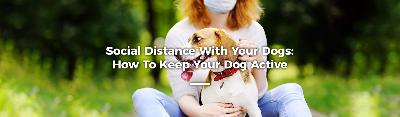 social-distancing-dog-home-feature
