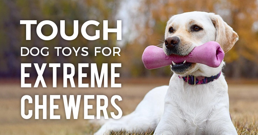 Tough Dog Toys for Extreme Chewers