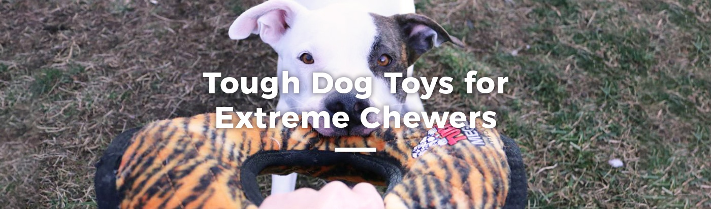 tough-dog-toys-chewers-home-feature