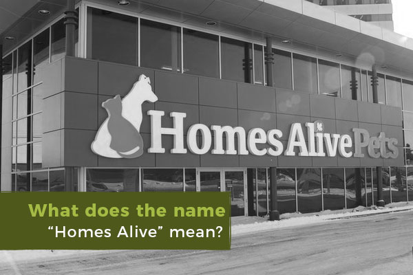 what-does-homes-alive-mean